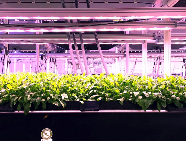 Plant Breeding LED - Plant Lights