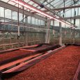 CeRSAA Greenhouse, Italy - Valoya B Series LED Grow Lights