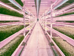 led grow lights vertical farming