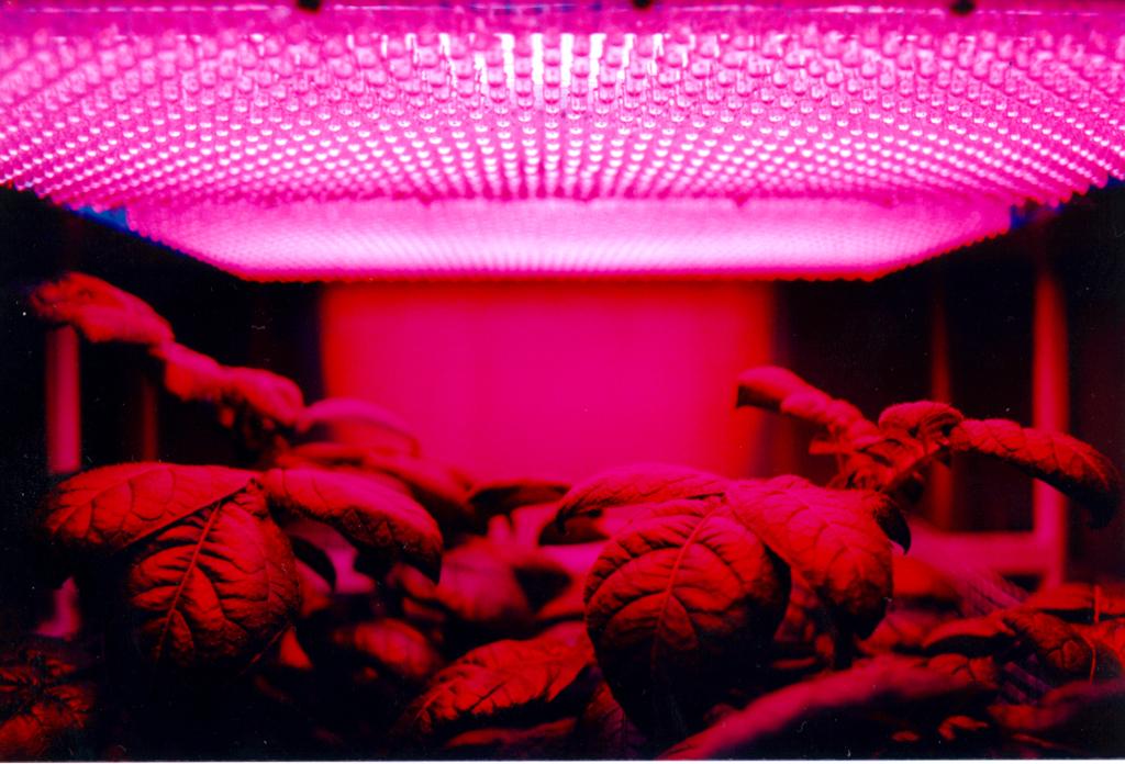 LED Grow Light CRI