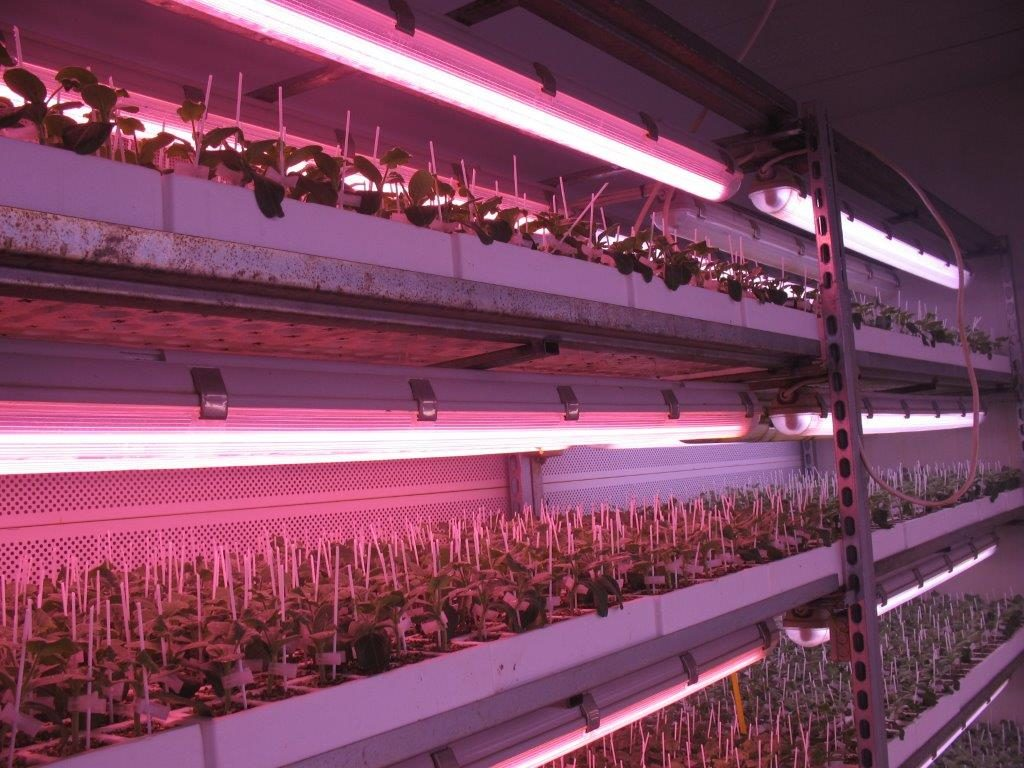 Valoya LED grow lights for grafting