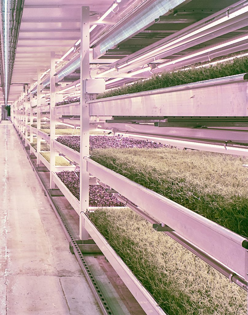 Valoya LED Grow Lights T8 Tubes Vertical Farming and Research