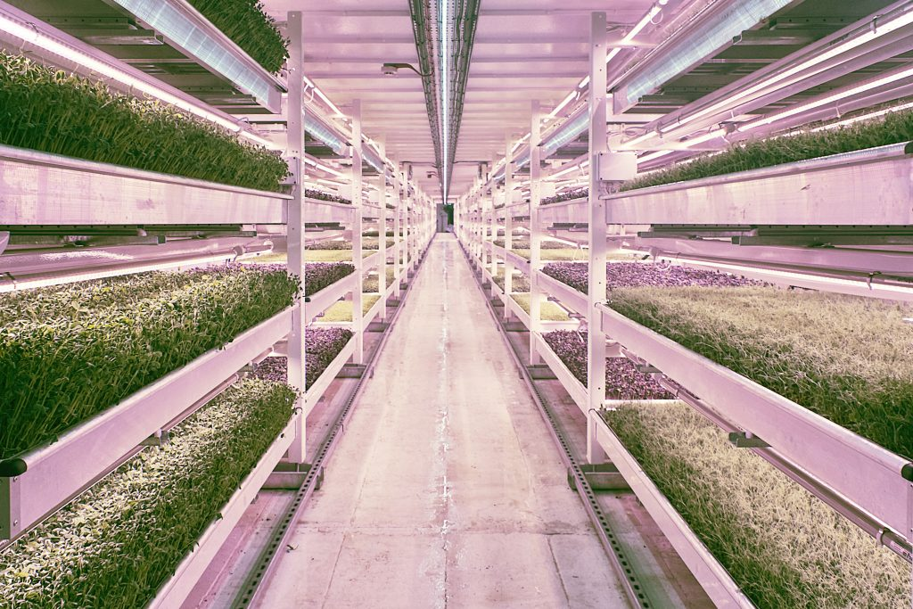 Vertical Farming Valoya LED Grow Lights