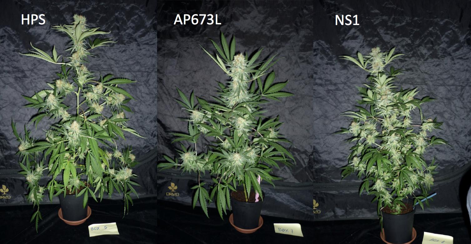 Hps Vs Led For Cannabis Cultivation Valoya Led Grow Lights