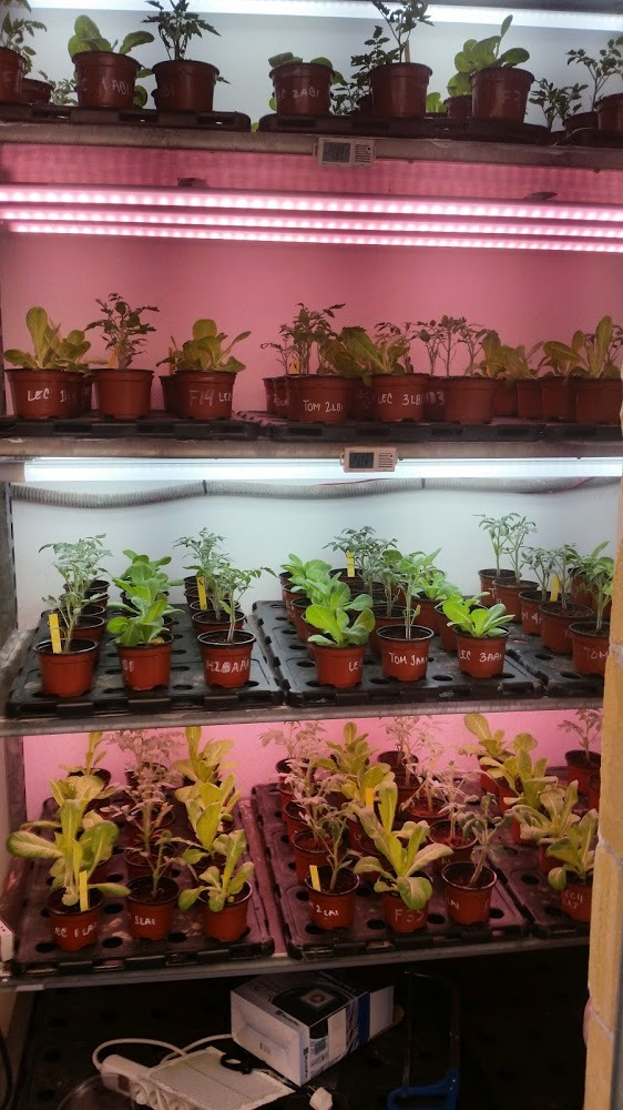 Tips for Plant Trials with LED Lights