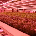 Vertical Farm GROWx, Amsterdam. Cultivation of microgreens.