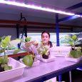 Ramiro Arnedo Lettuce Breeding, Spain - with Valoya B Series LED Grow Lights
