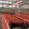 CeRSAA Greenhouse, Italy - Valoya B Series LED Grow Lights