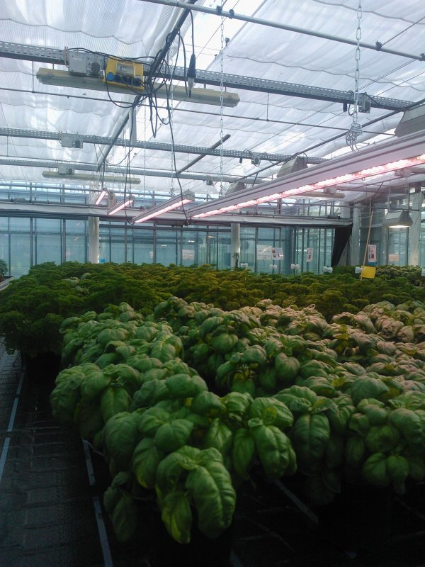 Horticultural sciences conference Freising Valoya basil parsley 2