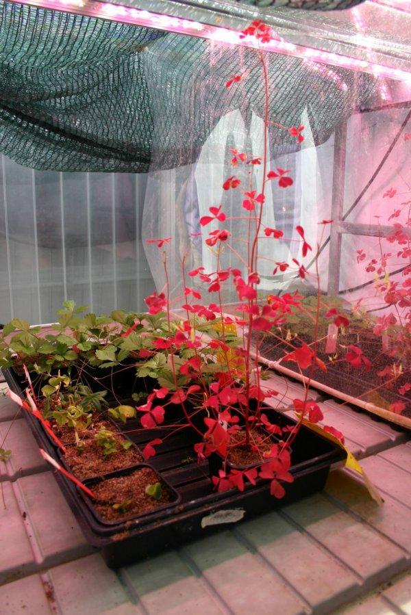Valoya LEDs University of Helsinki greenhouse