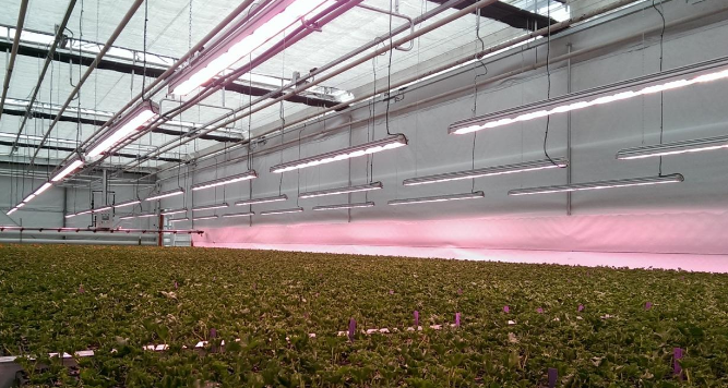 Valoya Has One of the Largest Patent Portfolios of the Horticultural Lighting Industry
