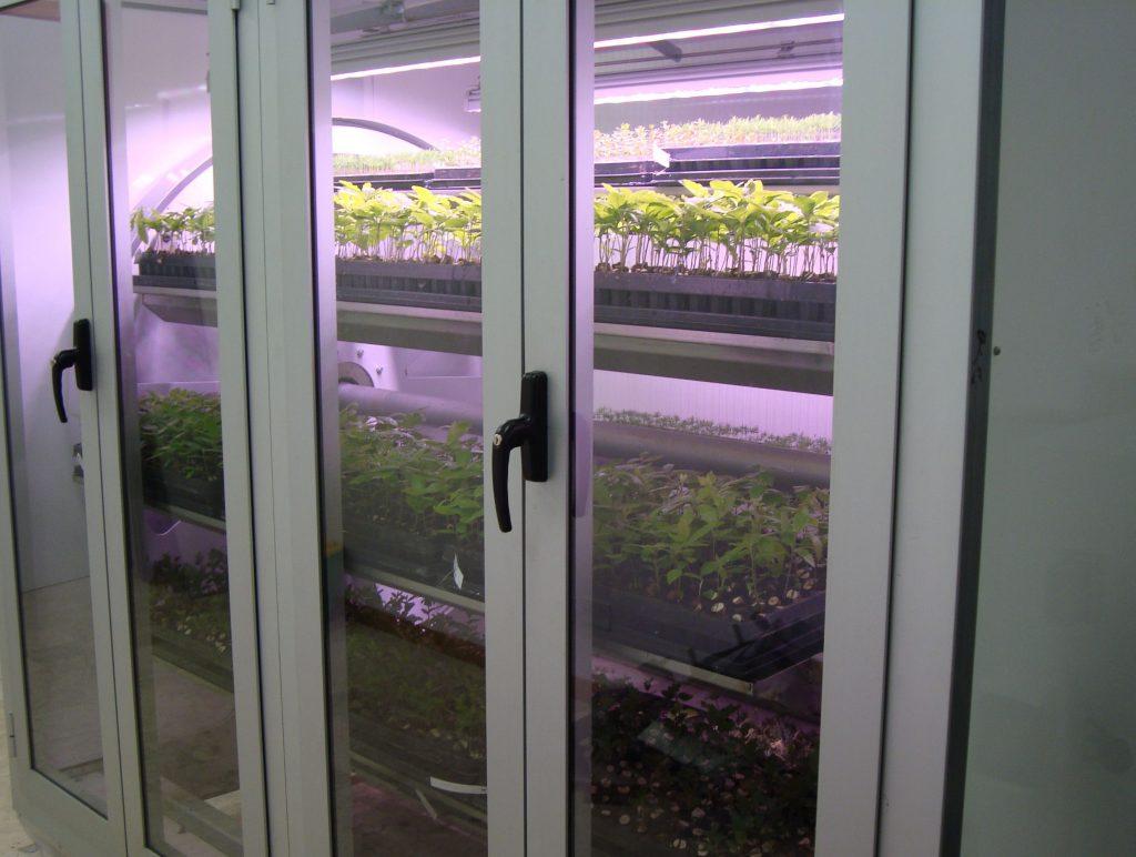 Fluorescent Vs Led Light For Tree Seedling Cultivation