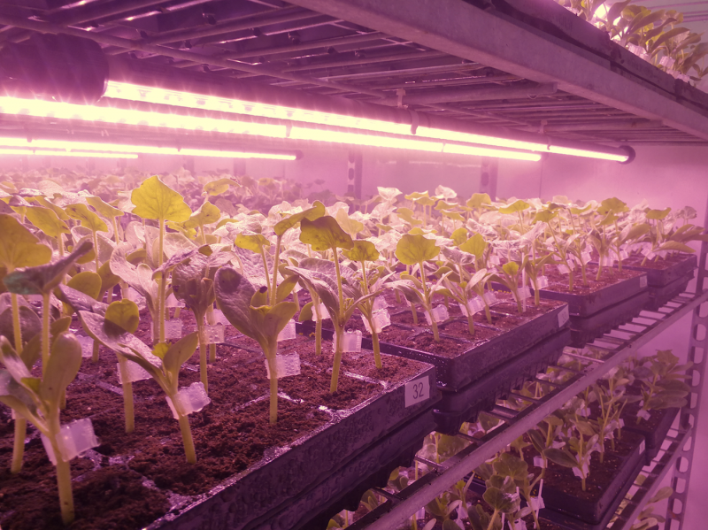 Valoya LED Grow Lights for Grafting