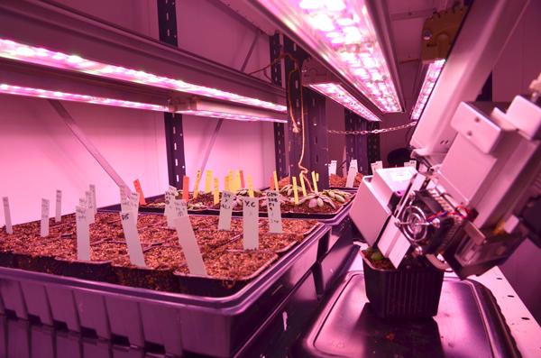 Light Planning: 3 Steps to Ensure Efficient Plant Growth with LEDs valoya-led-blog-1