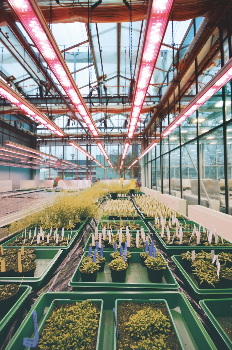 LED Grow Lights Light approaches to speed up generation turnover