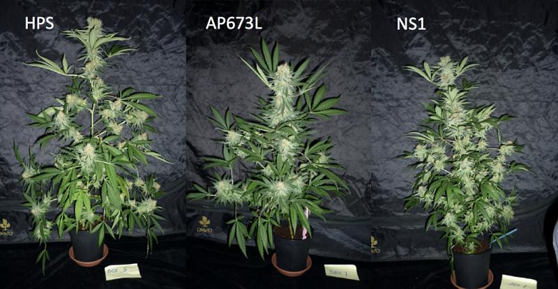 HPS LED comparison