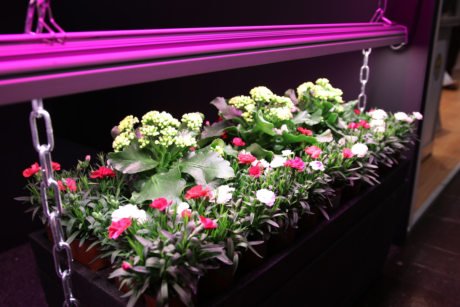 LightDNA 2-channel LED Grow Lights