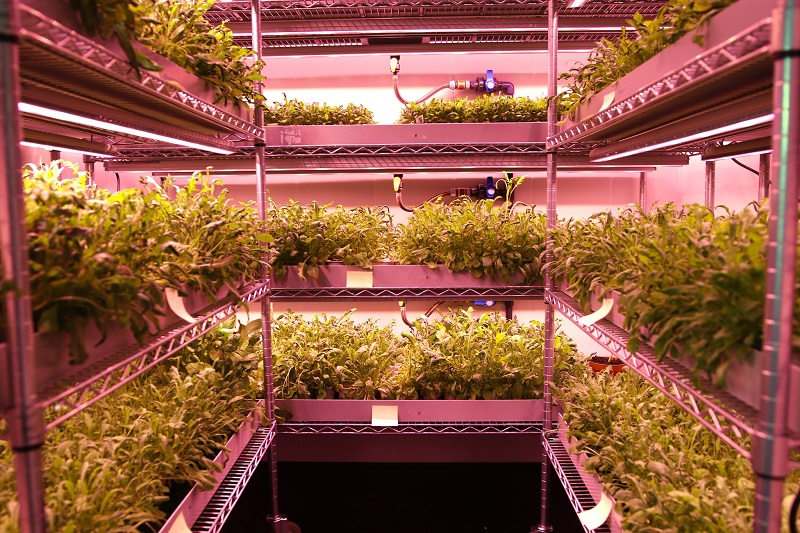 Tips for Setting Up Successful Plant Trials with LED