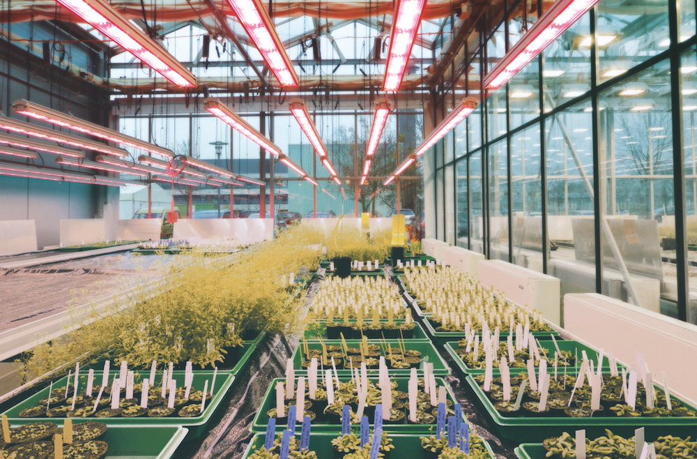Plant Breeding LED Grow Lights Speed Breeding