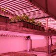 Valoya AP673L spectrum for vegetative growth. Bayer Crop Protection.