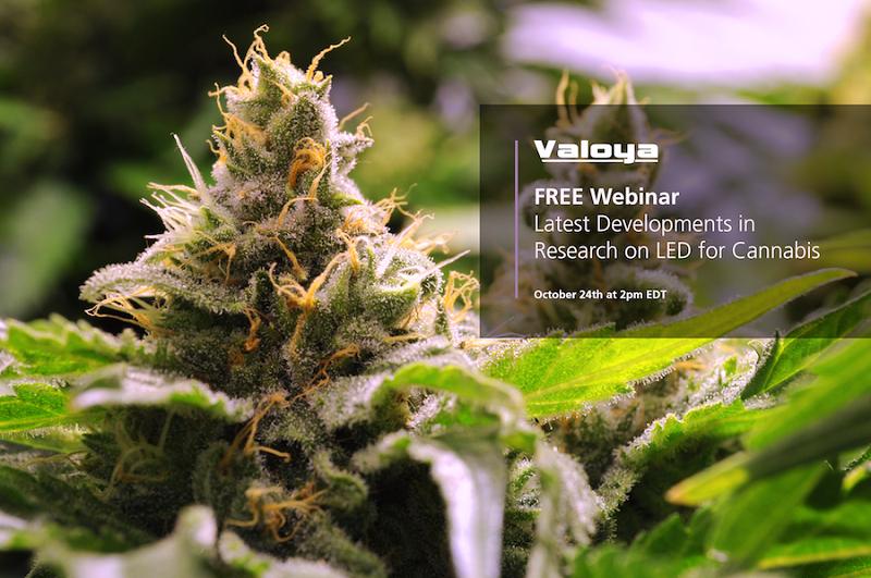 Valoya Cannabis Webinar