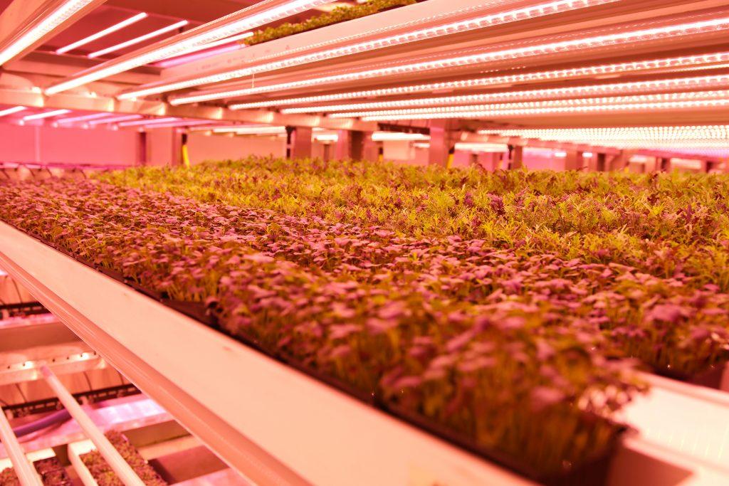 GROWx-Vertical-Farm-Valoya-LED-Grow-Lights