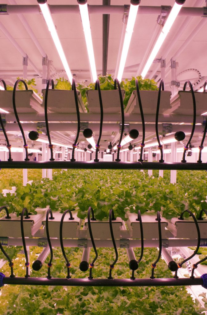 New-LED-Tube-for-Vertical-Farmers-Pic-2-674x1024