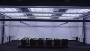 Valoya Has One of the Largest Patent Portfolios of the Horticultural Lighting Industry picture-300x169
