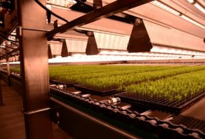Valoya Has One of the Largest Patent Portfolios of the Horticultural Lighting Industry valoya_hortidaily_24_11_2016-300x204
