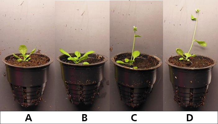 Arabidopsis Thaliana R:Fr ratio