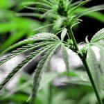 medical-plants