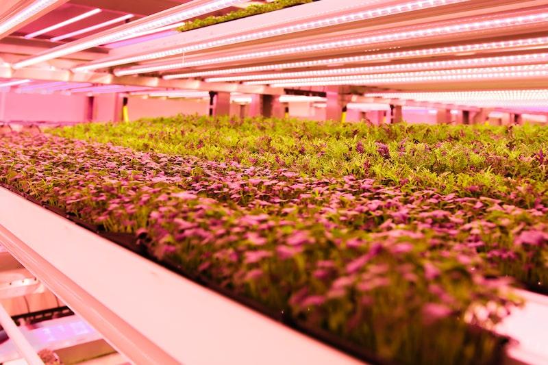 vertical farming, carousel 3