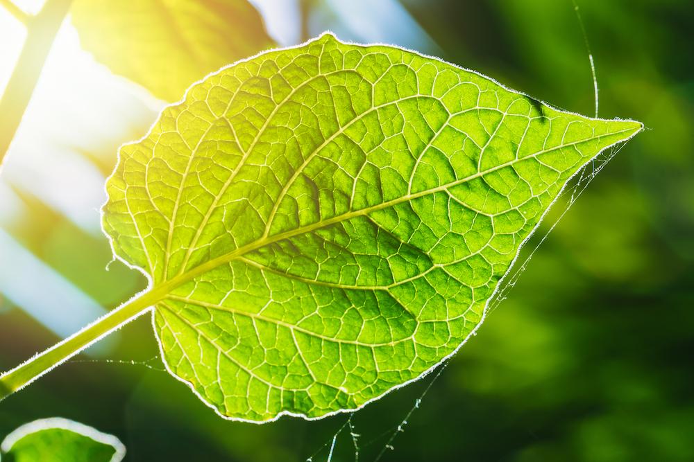 Valoya Plant Biology