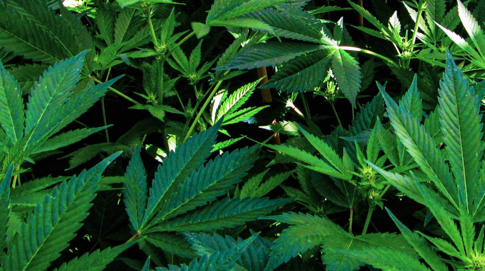 webinar_medical plants