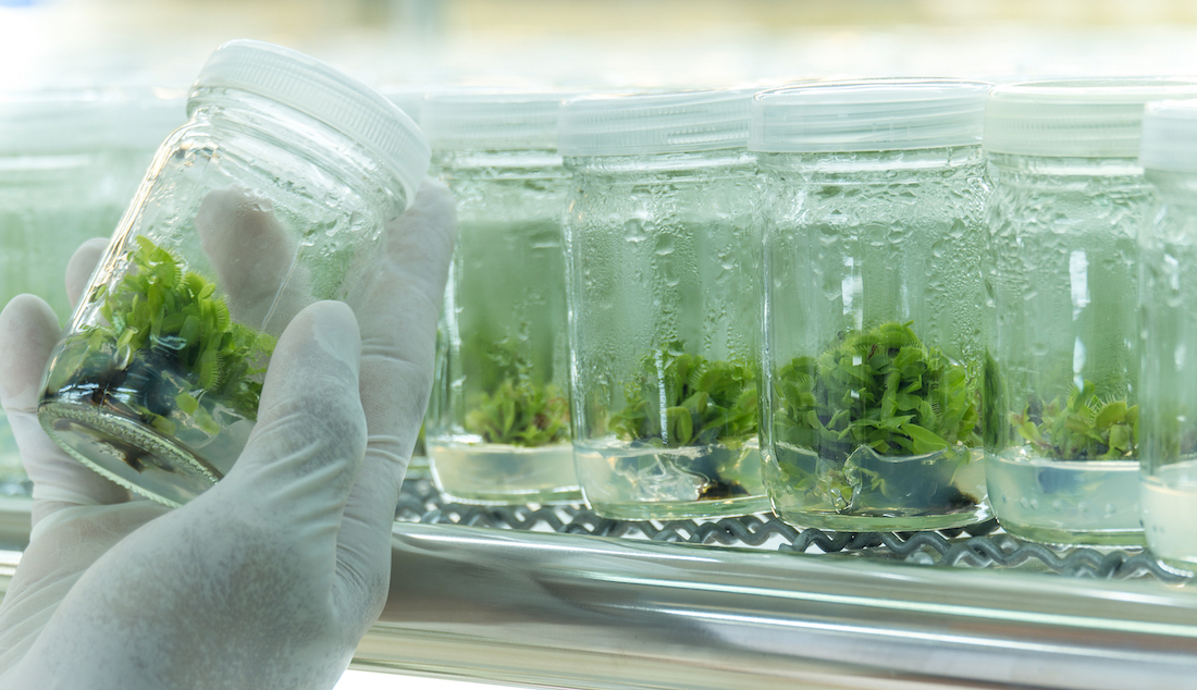 Plant Biology Research