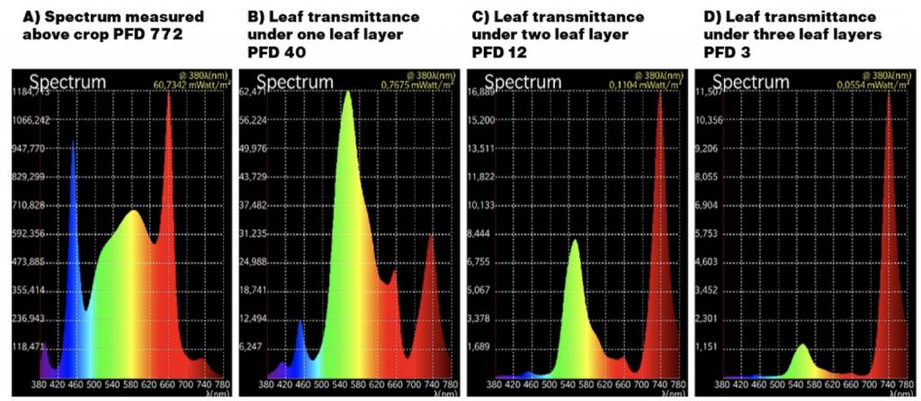 light transmittance through the cannabis canopy