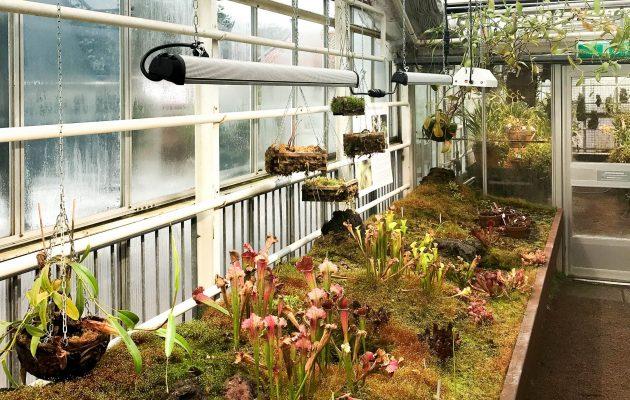 Gotebog Botanic Garden, Valoya BL-Series LED Grow Lights
